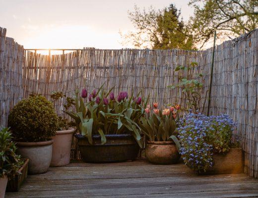 Tulpen auf dem Balkon